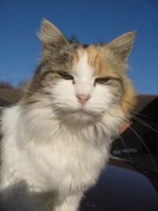 cats - mischa 4