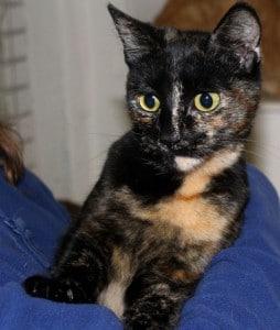 cats - minnie 10