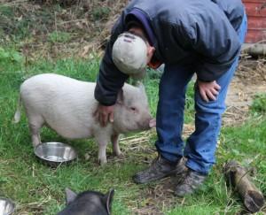 pigs - pinky 3