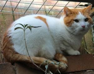 cats - denver 2