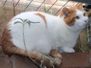 cats - denver 5