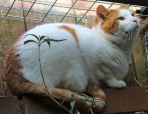 cats - denver 6