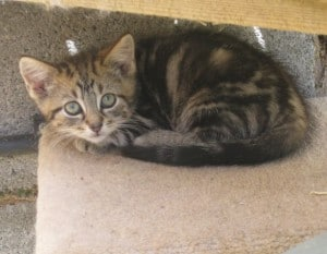 kittens - dino 6