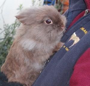 rabbits - fudge 4 - 1