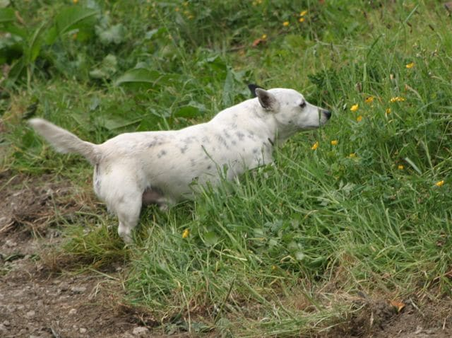 Lyme Disease in dogs cases rise