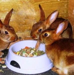 rabbits - babies