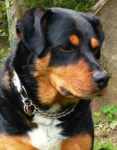 dogs - Mr. Beau 2 - 1