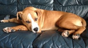 dogs-adoption-by-owner-1