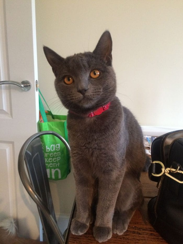 Have you seen this lost cat called Dakota