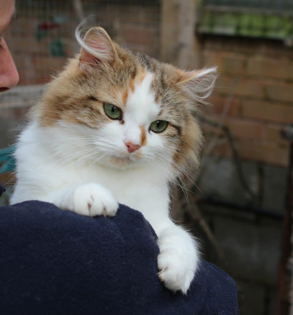 Cat for adoption St Bernards