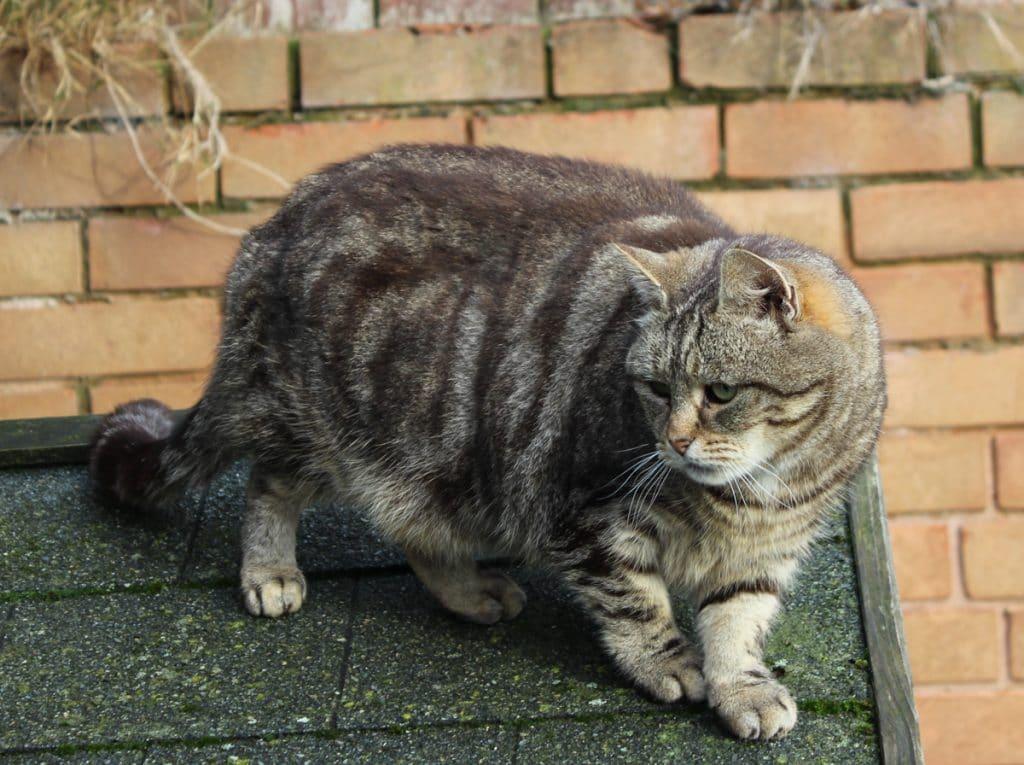 Cat Adoption derbyshire