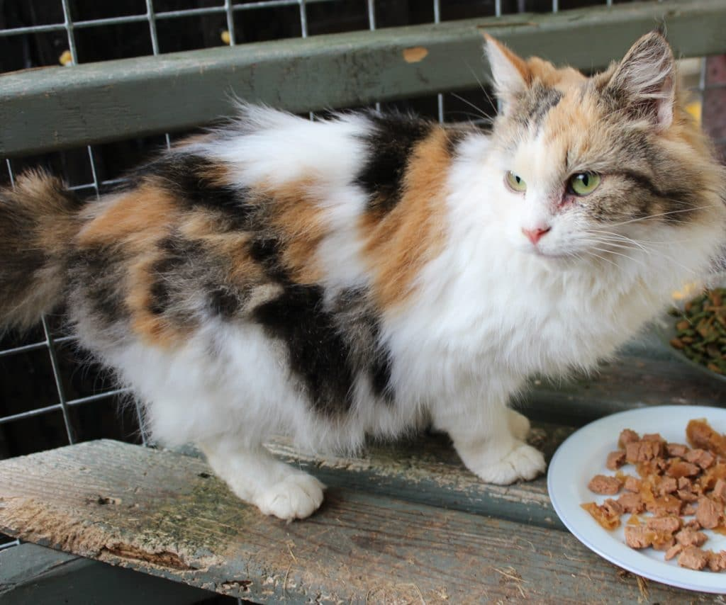 Cat looking for home