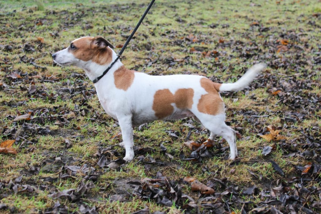 Darcie looking for new home adoption