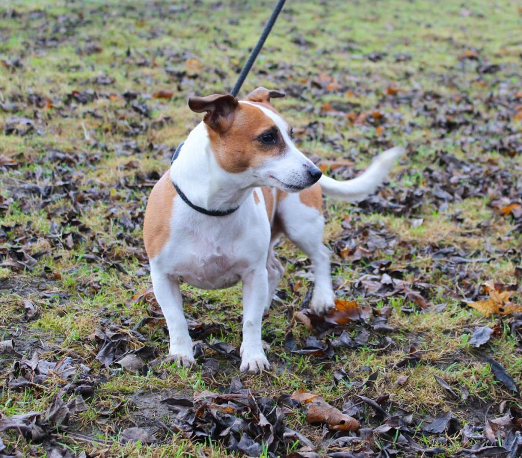 Dog Adoption derbyshire
