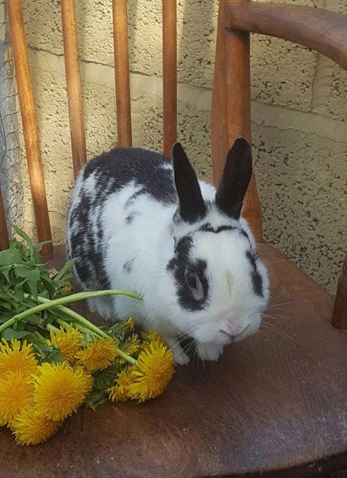 Hector rabbit