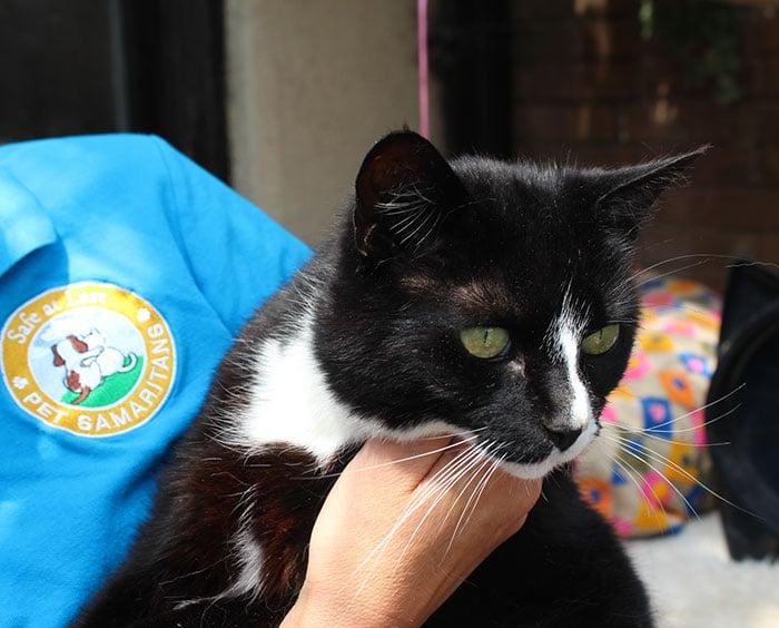 Hurley Cat Adopt
