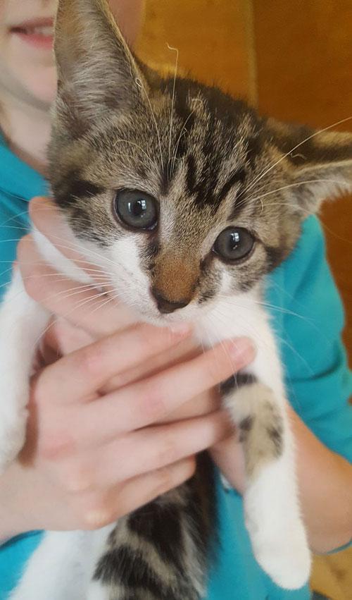Kitten adopt