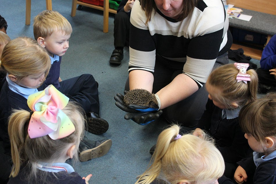 Hedgehogs at school