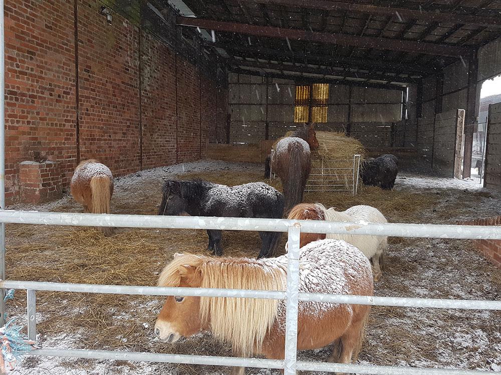 Little ponies snowed in