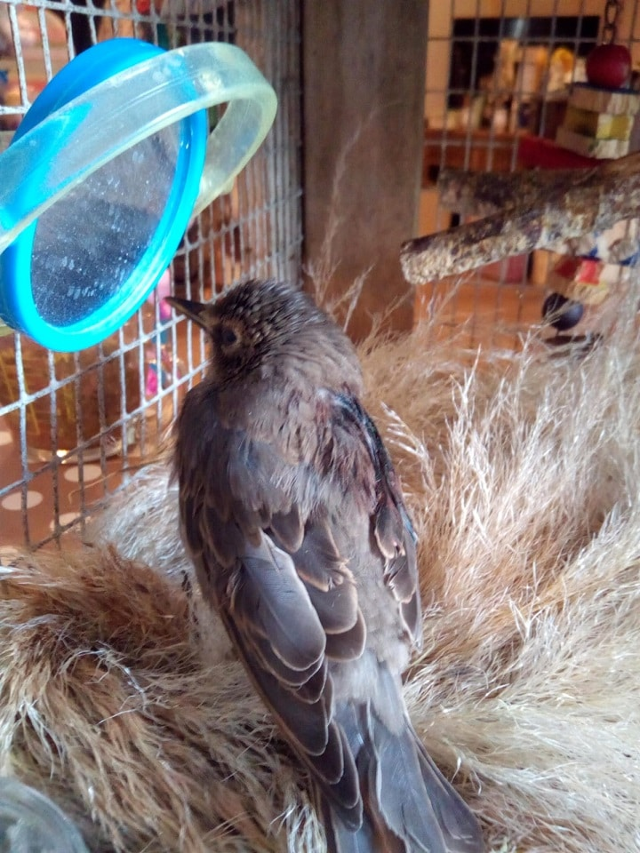 bird recovering at sanctuary