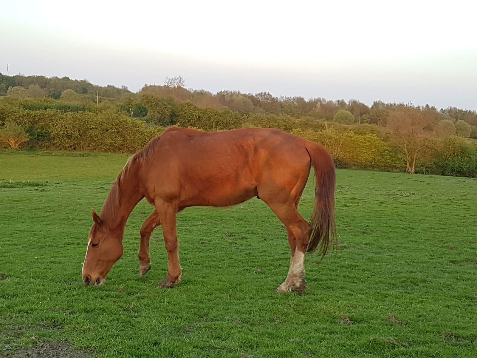 Fidlin Horse for Adoption – Rehomed