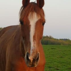 Fidlin Horse for Adoption – Rehomed
