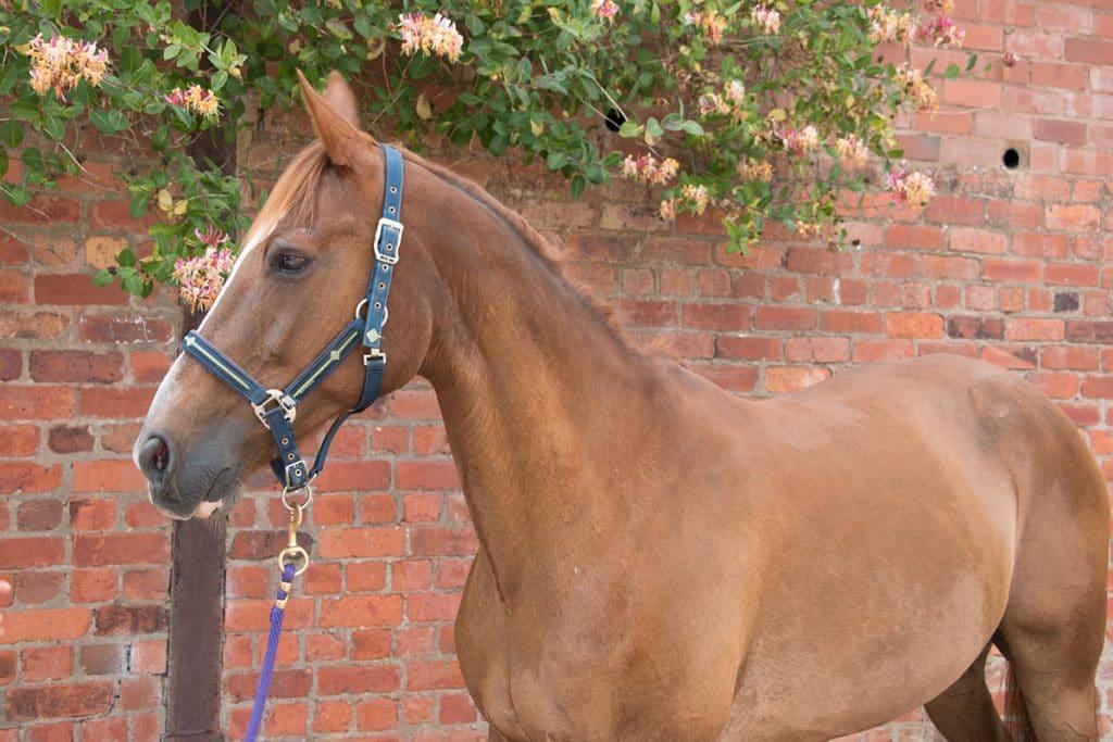 Fidlin horse