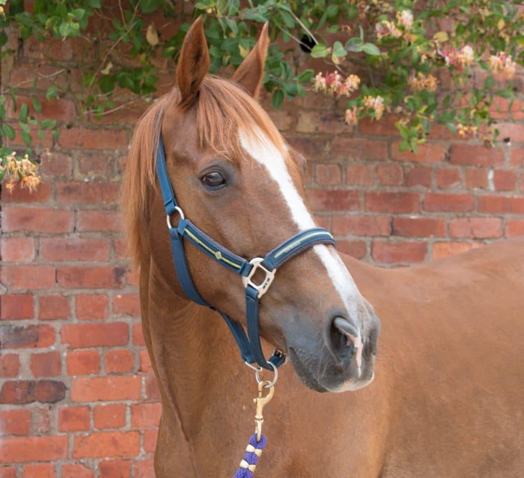Fidlin Racehorse Rehomed