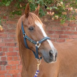 Champion Racehorse reunited with his Owner