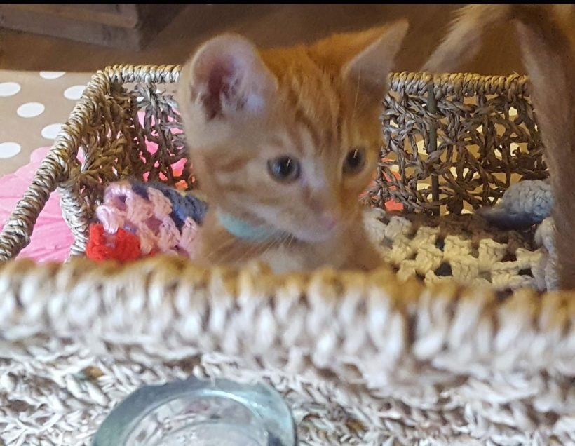 Kittens Available for Adoption