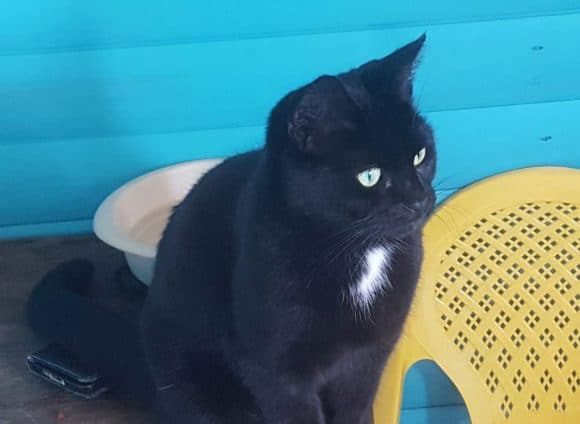 Narla Cat for Adoption