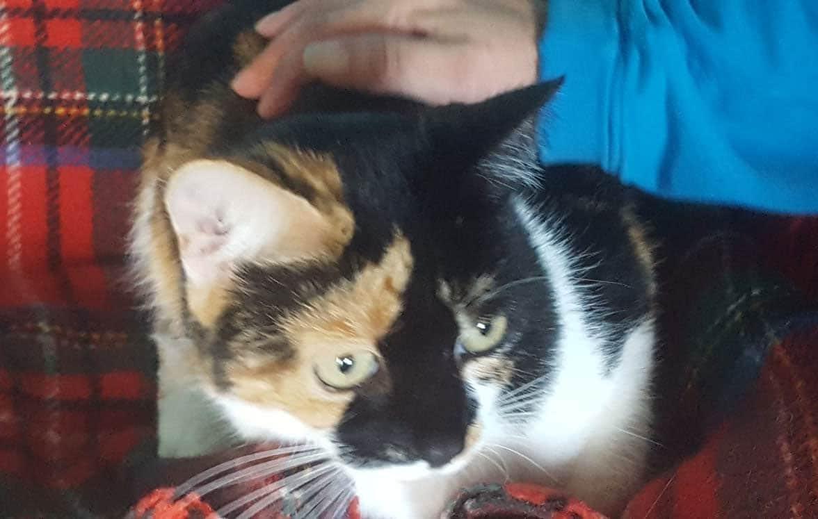 Puss for Adoption