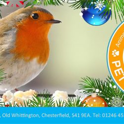 Winter News and Christmas Fayre