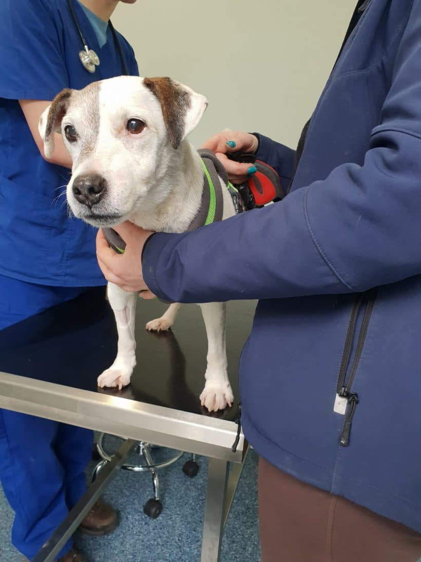 Alans Feeling Great Thanks to Staveley Vets