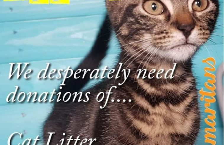 Cat Litter Appeal