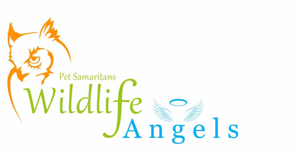 Become a Wildlife Angel and help injured wildlife