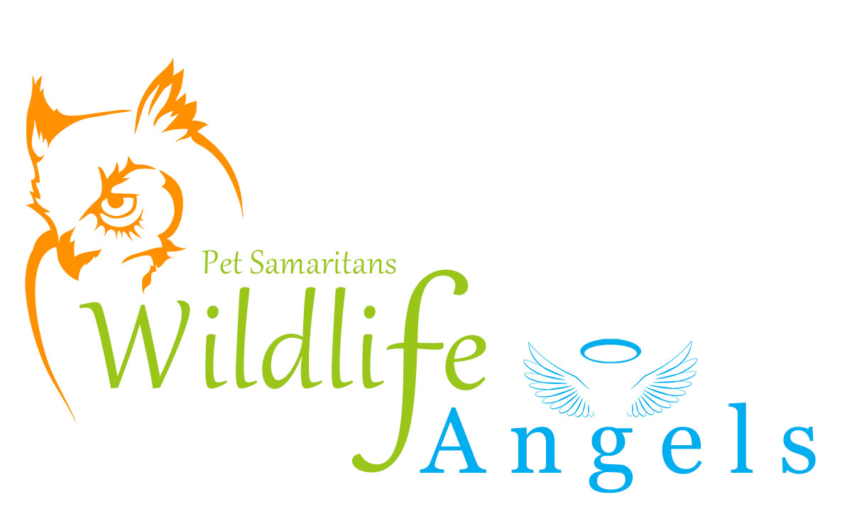 Support Wildlife and Become a Wildlife Guardian Angel
