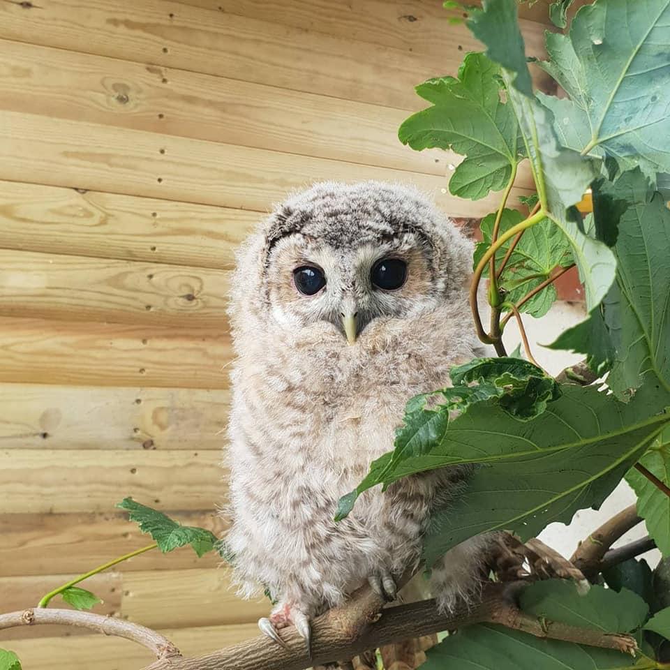 Wildlife Rescue Owls
