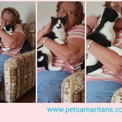 Pet adoptions