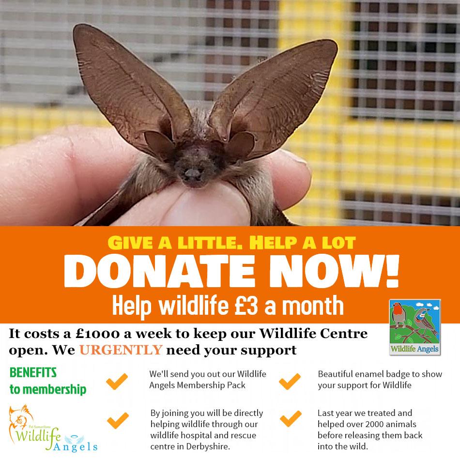 help british wildlife