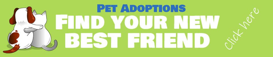 Pet adoptions at the animal sanctuary