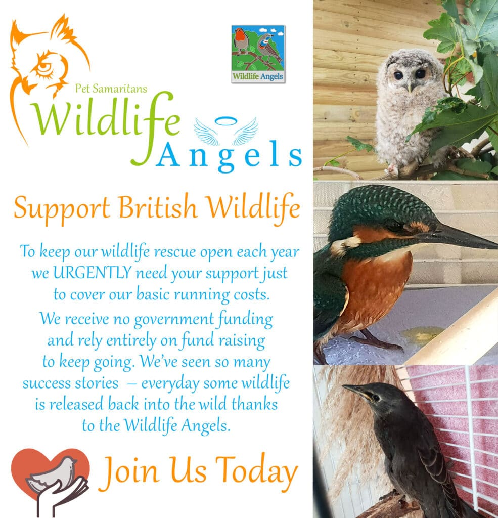 British wildlife rescue