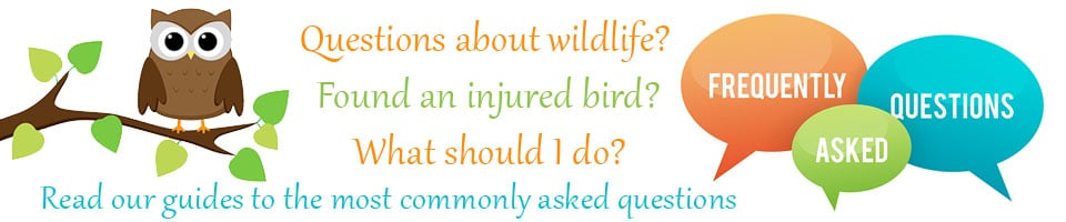 Wildlife rescue guides for frequently asked questions