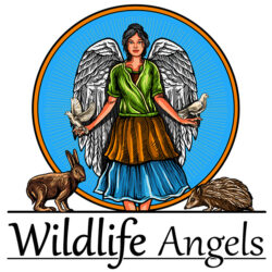 Wildlife Angels Wildlife Rescue