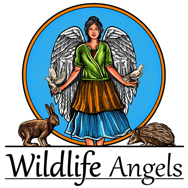 Help wildlife with the Wildlife Angels
