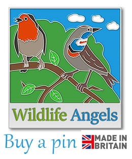Buy a wildlife angels pin