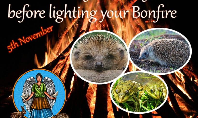 Watch out for Hedgehogs on Bonfire Night