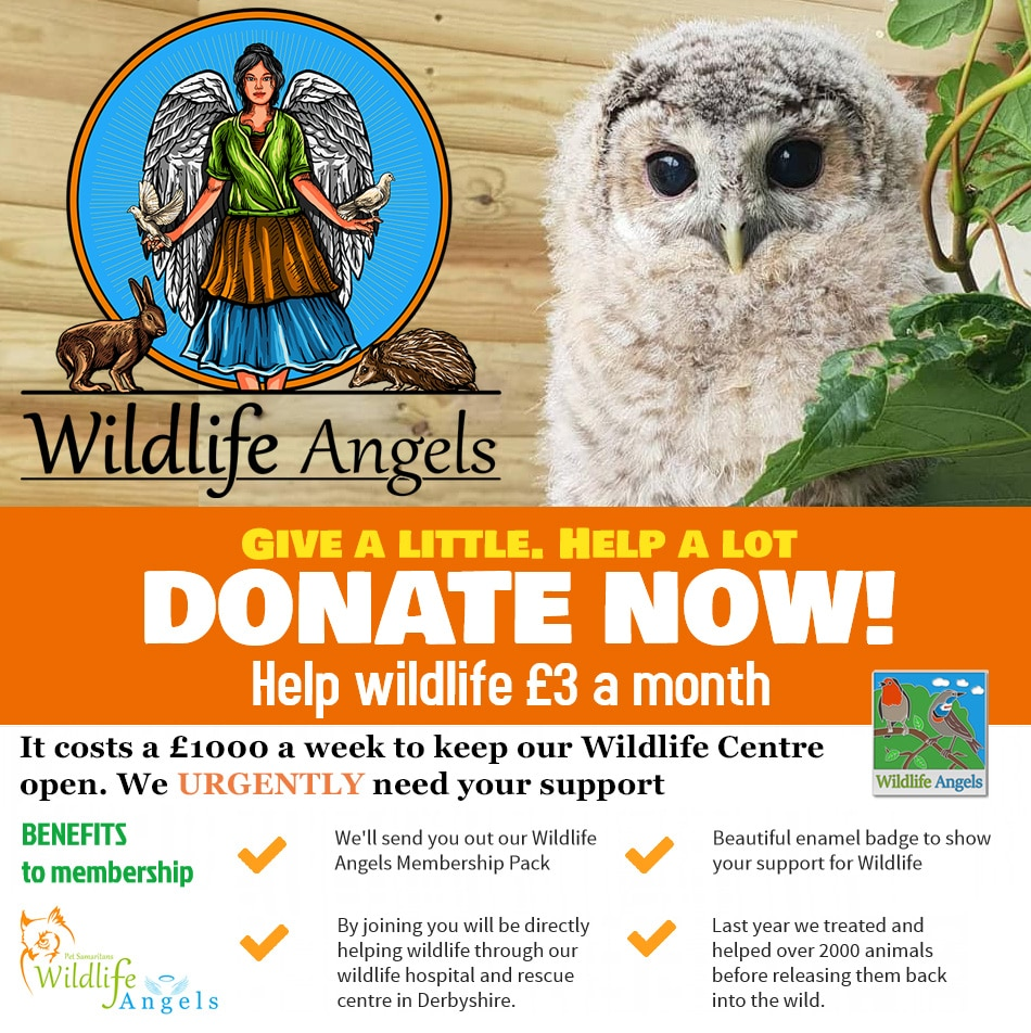 Wildlife rescue with the wildlife angels