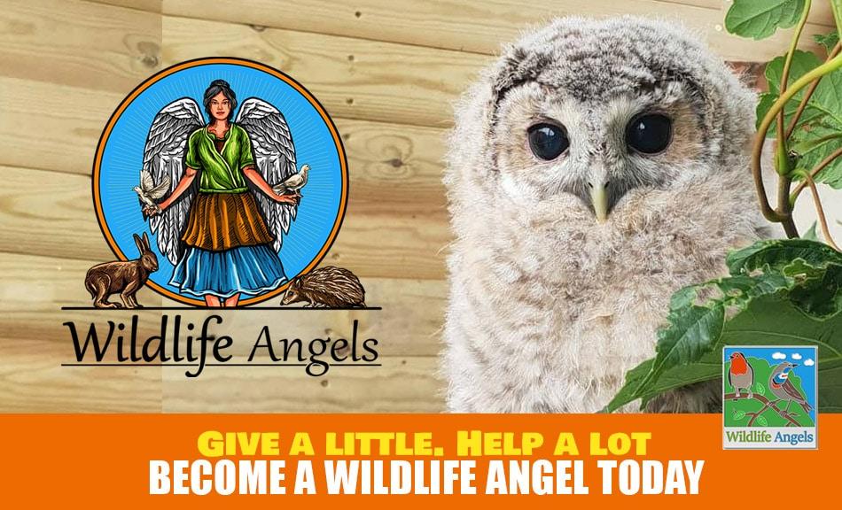 Wildlife Rescue Derbyshire